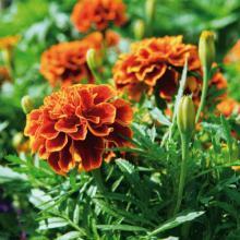 Aplicación de métodos de control fitosanitarios en plantas, suelo e instalaciones.Horticultura y floricultura