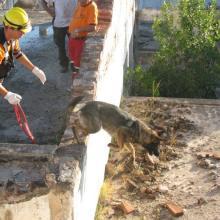 UF2741 Adiestramiento de Perros en Búsqueda y Localización de Personas mediante Venteo-en Estructuras Colapsadas e Interior de Edificios