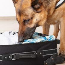 UF2740 Adiestramiento de Perros en Operaciones de Rastreo de Personas y Indicios Personales-sobre una Pista Olorosa o Sucesión de Huellas e Indicios P