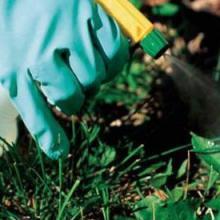 Aplicación de métodos de control fitosanitarios en plantas, suelo e instalaciones- Instalación y mantenimiento de jardines y zonas verdes