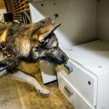 UF2744 Asociación del Olor de Sustancias para su Detección por el Perro